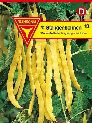 Goldelfe Quedlinburger Stangenbohnen