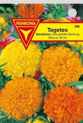 Tagetes hohe gef. Mischung Frankonia Samen