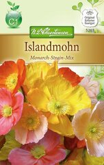 Islandmohn Monarch