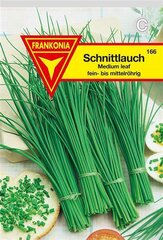 Schnittlauch Medium leaved Frankonia Samen